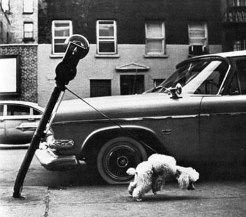 Dog_and_parking_meter