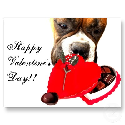 Valentines_day_boxer_dog_greeting_card_postcard-p239778439421935089z8iat_400