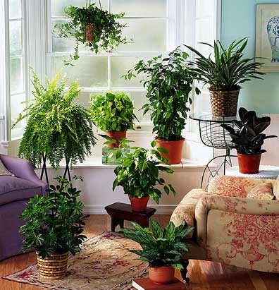 House-Planting-Sample-Picture-6