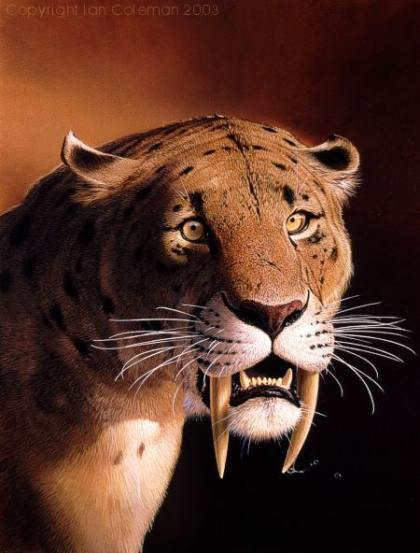 Saber-Tooth-Tiger1