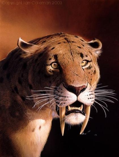 Saber-Tooth-Tiger1