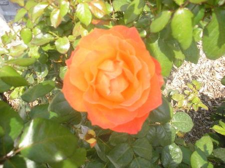 San_diego_flower