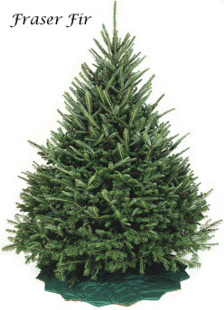 Types of Christmas Trees 5Udhogp9