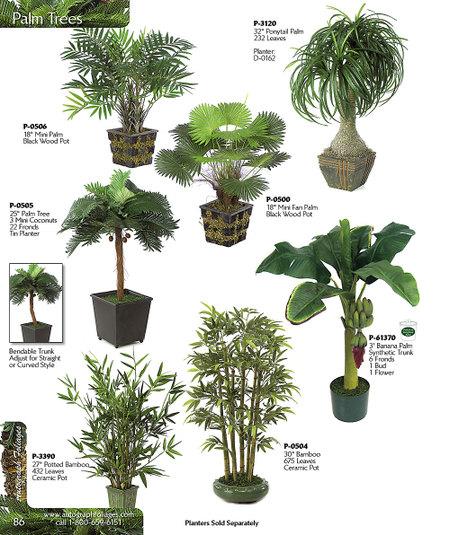 Bamboo_palms
