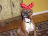 Christmas_2005_014