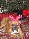 Christmas_2005_016