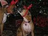 Christmas_2005_022