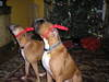 Christmas_2005_025