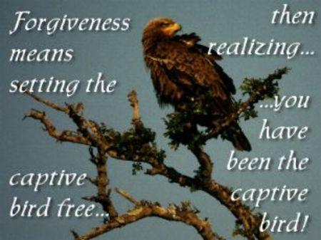 Forgiveness_birdfree