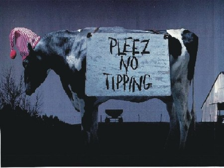 No20cow20tipping