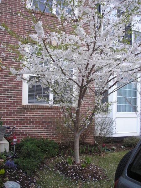Spring_2006_003